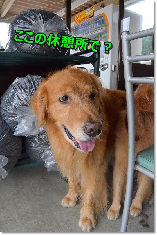 DSC_7670_20180930144419c55.jpg