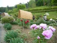 2018-05-13花と泉の公園-牡丹園171