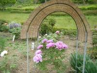 2018-05-13花と泉の公園-牡丹園180