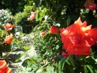 2018-06-09花巻薔薇園125