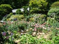2018-06-09花巻薔薇園123