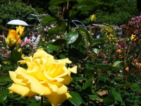 2018-06-09花巻薔薇園129