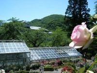 2018-06-09花巻薔薇園127