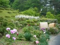 2018-05-13花と泉の公園-牡丹園184