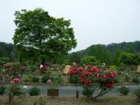 2018-05-13花と泉の公園-牡丹園191