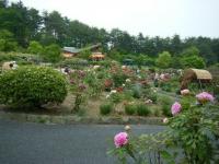 2018-05-13花と泉の公園-牡丹園190