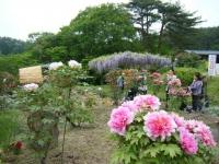 2018-05-13花と泉の公園-牡丹園189