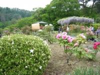 2018-05-13花と泉の公園-牡丹園188
