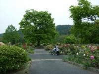 2018-05-13花と泉の公園-牡丹園187