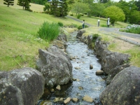 2018-06-16登米市南方花菖蒲の郷-しろぷーうさぎ143