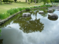 2018-06-16登米市南方花菖蒲の郷-しろぷーうさぎ139