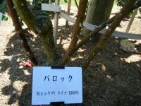 2018-06-09花巻薔薇園134