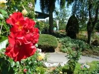 2018-06-09花巻薔薇園141