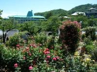 2018-06-09花巻薔薇園140
