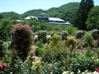 2018-06-09花巻薔薇園139