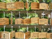 2018-07-14重箱石しろぷーうさぎ・中尊寺ハス祭り095