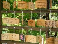 2018-07-14重箱石しろぷーうさぎ・中尊寺ハス祭り094