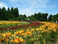 2018-06-30一迫ユリ園ーしろぷーうさぎー110