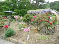 2018-05-13花と泉の公園-牡丹園201