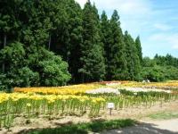 2018-06-30一迫ユリ園ーしろぷーうさぎー137