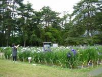2018-06-30平泉-毛越寺アヤメ祭り-しろぷーうさぎ129