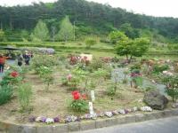 2018-05-13花と泉の公園-牡丹園205
