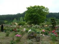 2018-05-13花と泉の公園-牡丹園211