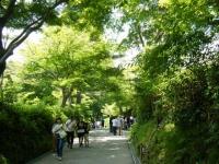 2018-07-14重箱石しろぷーうさぎ・中尊寺ハス祭り118