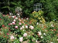 2018-06-09花巻薔薇園168