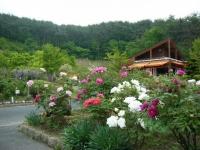 2018-05-13花と泉の公園-牡丹園228