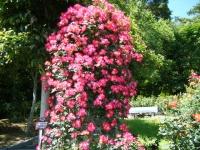 2018-06-09花巻薔薇園173