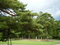 2018-06-30平泉-毛越寺アヤメ祭り-しろぷーうさぎ148