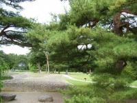2018-06-30平泉-毛越寺アヤメ祭り-しろぷーうさぎ147