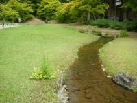 2018-06-30平泉-毛越寺アヤメ祭り-しろぷーうさぎ151