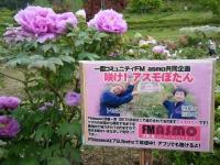 2018-05-13花と泉の公園-牡丹園232