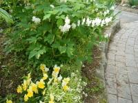 2018-05-13花と泉の公園-牡丹園246