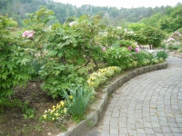 2018-05-13花と泉の公園-牡丹園245