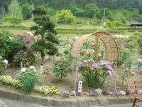 2018-05-13花と泉の公園-牡丹園244