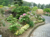2018-05-13花と泉の公園-牡丹園243