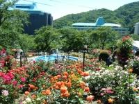 2018-06-09花巻薔薇園183