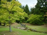 2018-06-30平泉-毛越寺アヤメ祭り-しろぷーうさぎ158