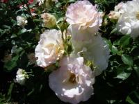 2018-06-09花巻薔薇園200