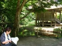 2018-07-14重箱石しろぷーうさぎ・中尊寺ハス祭り155