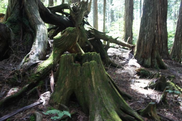 赤沢自然休養林02