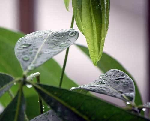180901雨滴5