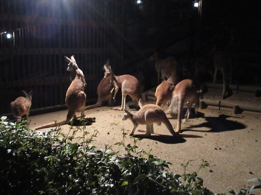 サマーナイト多摩動物公園