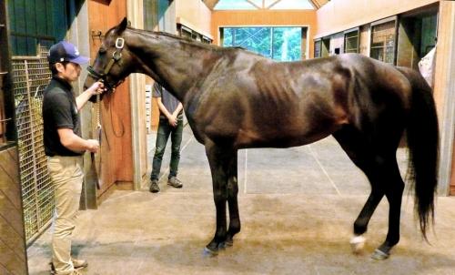 【競馬】キタサンブラック種付け頭数130頭ww