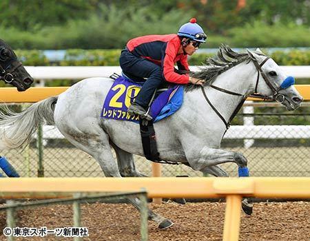 【スプリンターズS】戸崎圭太「レッドファルクス、とても良い馬。状態も全く不安が無い」