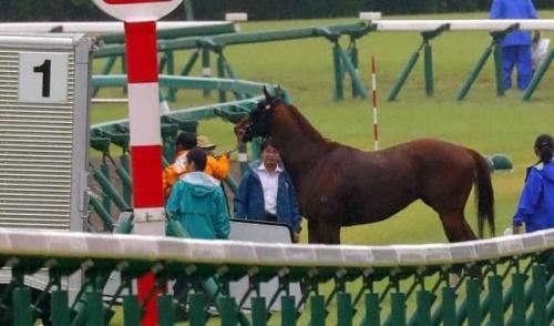 【スプリンターズS】香港馬ラッキーバブルズが故障。日本は海外馬の処刑場