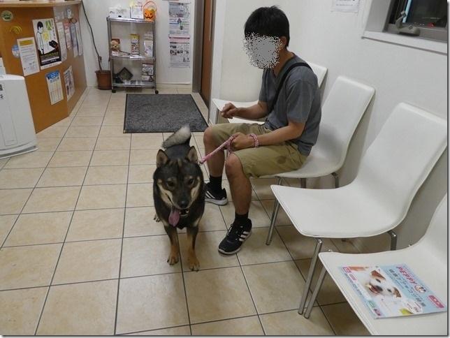 20180918桃太狂犬病予防-07